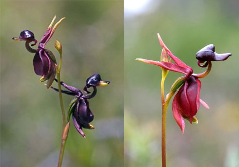 Orchids that look like animals that I must have for my collection!