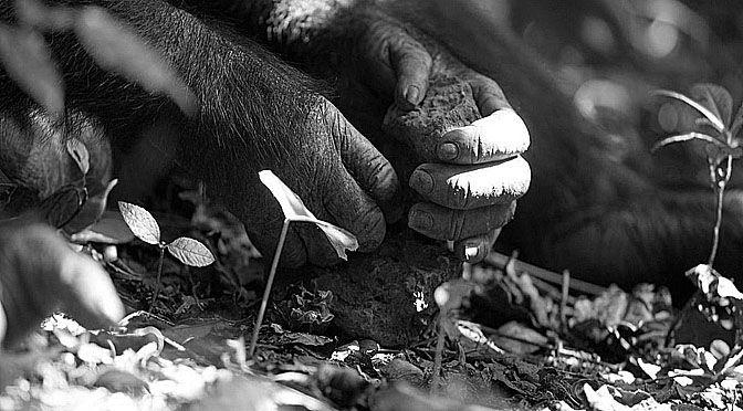 Los monos capuchinos usan herramientas de piedra a modo de martillo. Eligen rocas y las golpean contra otras, creando así lascas. Aunque no es su intención.
