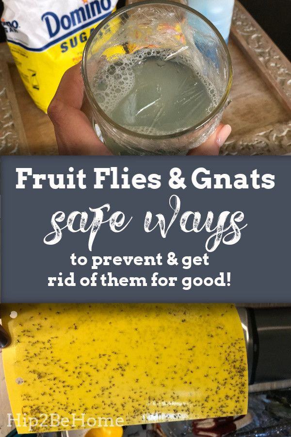 Safe Ways To Prevent And Get Rid Of Fruit Flies Fruit Fly Trap