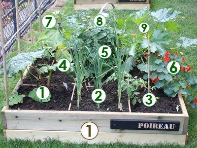 Scène de potager : un carré d'été (Scènes de jardins)