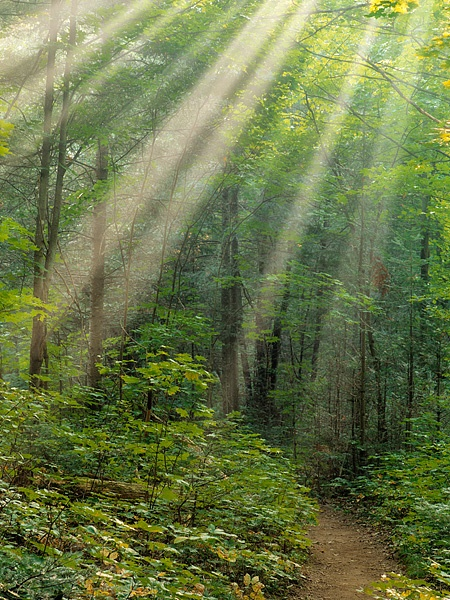 Algonquin Park trail, fog, Algonquin Provincial Park, Ontario, Canada, forest, light rays, God beams, green, photo