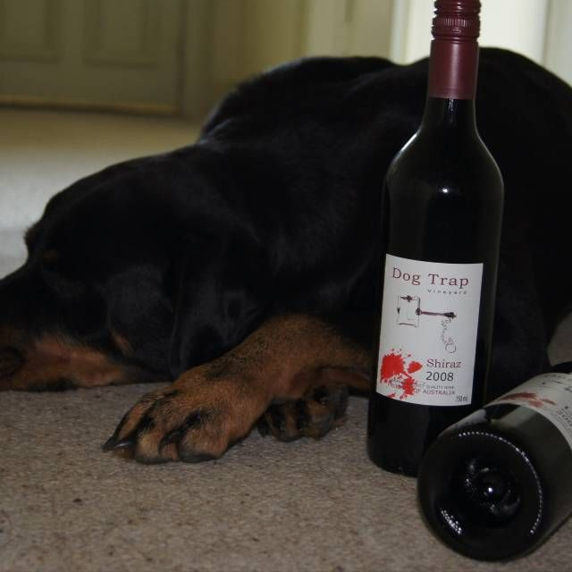 Dog Trap Vineyard is a small boutique winery near Yass, New South Wales.