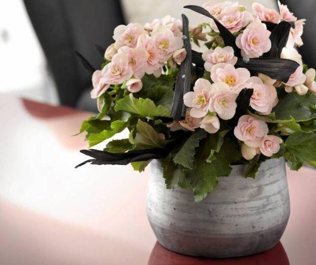 Rosliny Ktore Kwitna Zima Begonia Floral Wreath Floral