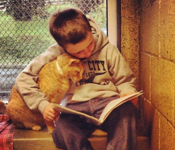米ペンシルベニア州バークス郡にある動物保護センター「アニマル・レスキューリーグ」では新たなるプログラムを開始した。「ブック・バディー」と呼ばれるこのプログラムは、子どもたちに施設に来てもらって、猫の保護されている部屋で、猫に本を読んでもらうというものだ。