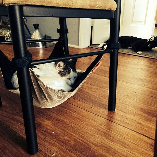 how to keep your cat out of the crib