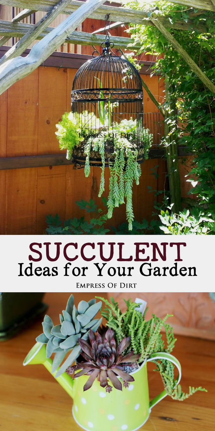 Succulents are easy going plants! No matter what quirky or unusual planting idea you can dream up, these wonderful plants will come along for the ride! #sponsored