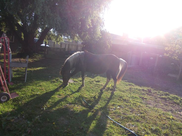 Gypsy in the sun <3