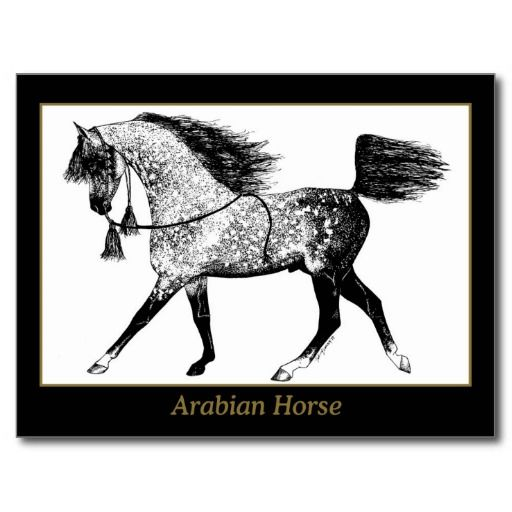>>>Smart Deals for          	Arabian Horse Postcard           	Arabian Horse Postcard you will get best price offer lowest prices or diccount couponeShopping          	Arabian Horse Postcard today easy to Shops & Purchase Online - transferred directly secure and trusted checkout...Cleck Hot Deals >>> http://www.zazzle.com/arabian_horse_postcard-239523561522952695?rf=238627982471231924&zbar=1&tc=terrest