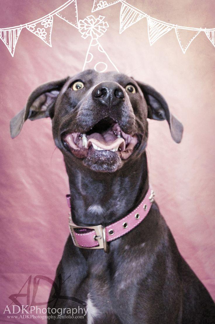 Mejores 40 imágenes de ADK Pet Photography en Pinterest   Fotografía ...
