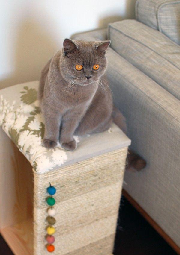17 migliori idee su mobili per gatto su pinterest letti per gatto case per gatto e alberi per. Black Bedroom Furniture Sets. Home Design Ideas