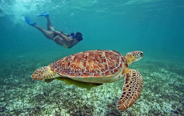 Snorkel with the turtles in Akumal Bay and Swim in an Ancient Cenote - Riviera Maya, Mexico!