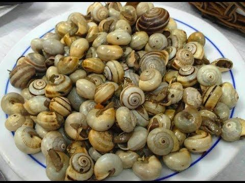 VIDEO: CARACOIS! Eating snails in Lisbon. #Portugal