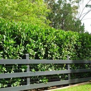 Fence around vege garden