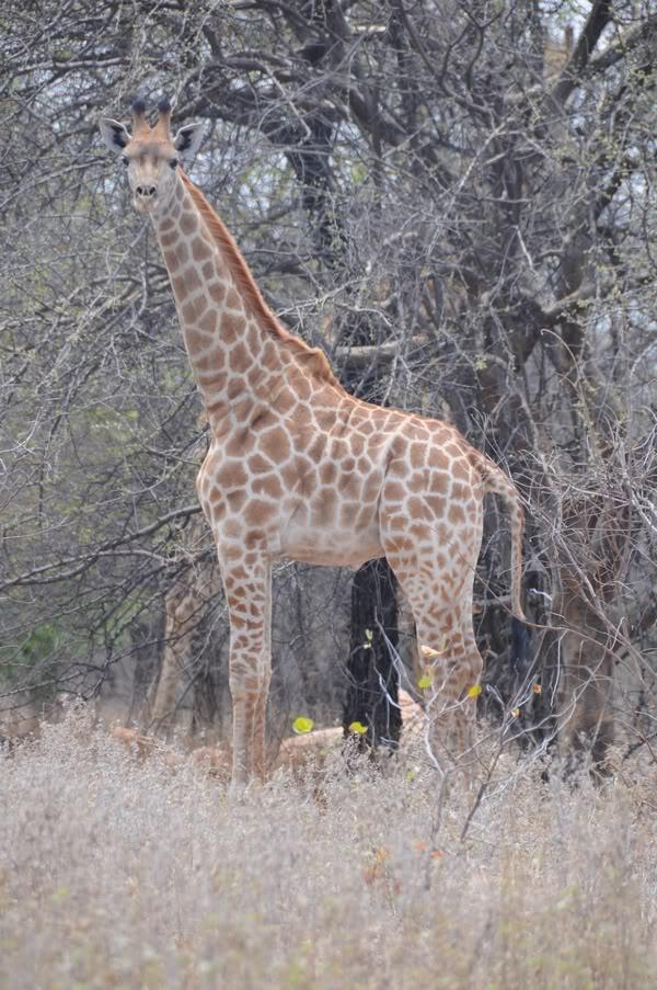 Kruger Park South-Africa