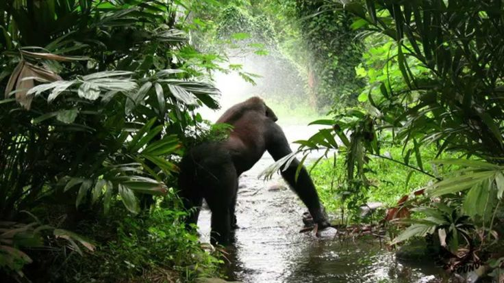 Jungle Sounds For Relaxation - Rainforest Sound ( Monkeys And Birds Ambi...