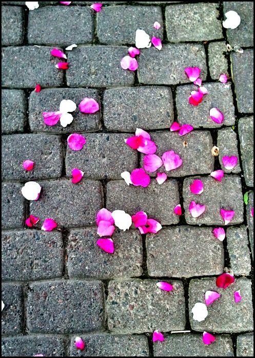 Petals on sidewalk
