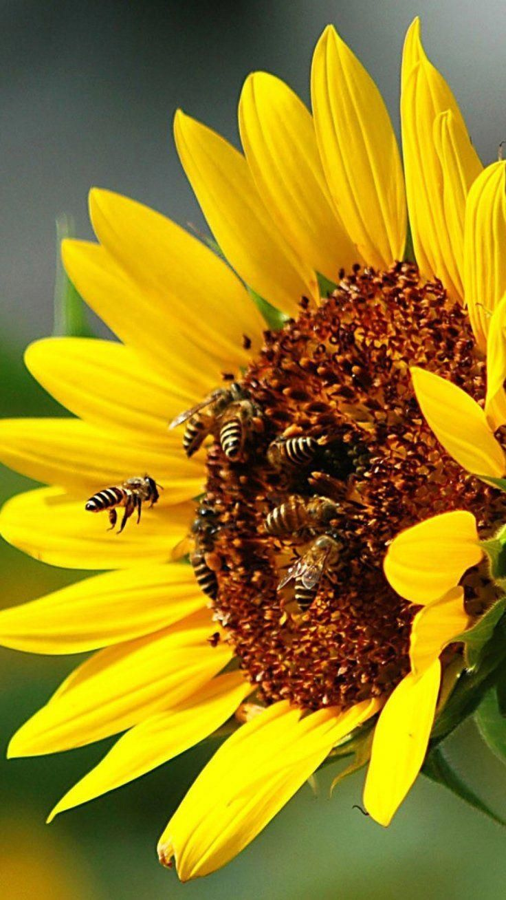 Foodtipsforhealthyhair Foodshoppingtips Plants Save The Bees Happy Flowers