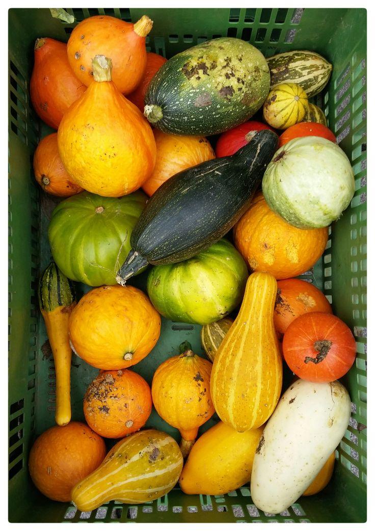 pumpkin-image