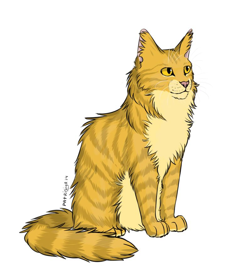 The Blazing Star Warriors: 166 Besten Warrior Cats Bilder Auf Pinterest
