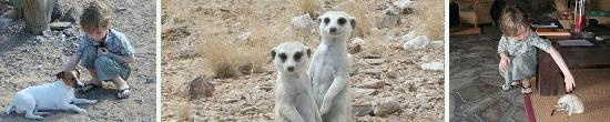 Rostock Ritz Desert Lodge: Meerkats and the dog