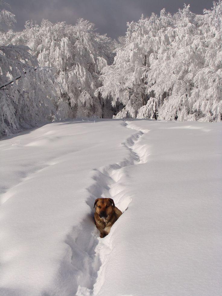 Nasz przewodnik na zimowym szlaku w kierunku Wetliny.  Poland