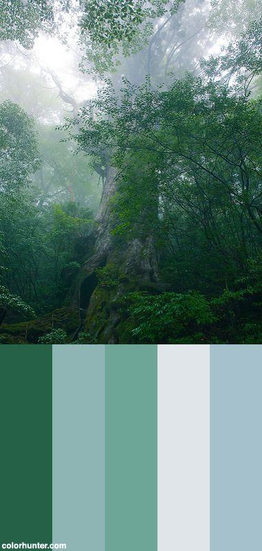 Nanahon-sugi,+Yakushima+Island+Color+Scheme