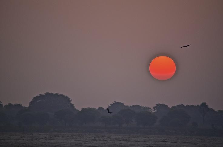 Sun Rise / Varanasi / Birds