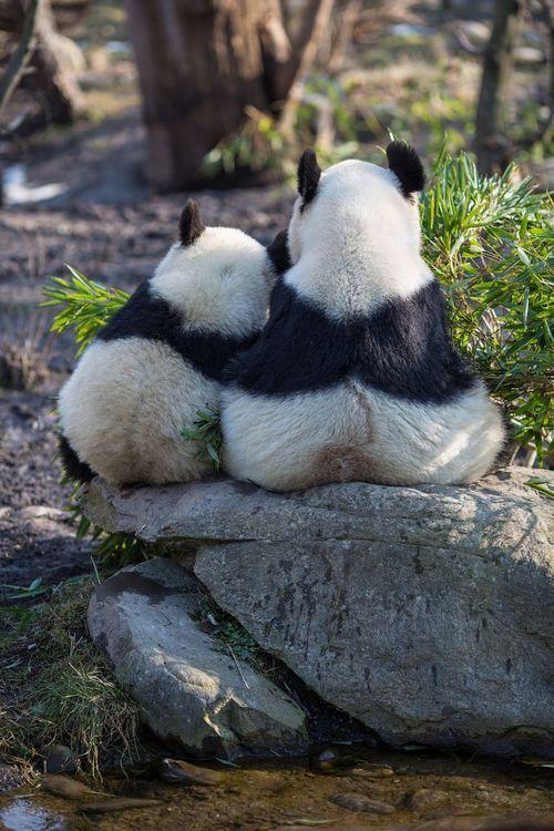 Pausa para um momento de observação, o filhote com a mãe.
