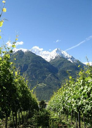 Valle d' Aosta - Grosjean's vineyards
