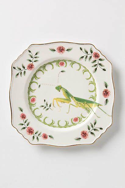 Nature Table Plate Praying Mantis Oooo Pretty Anthro