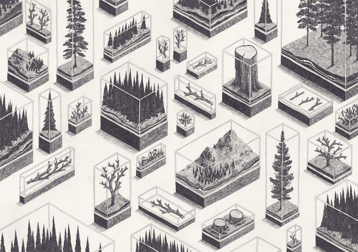 Forest - Jamie Mills