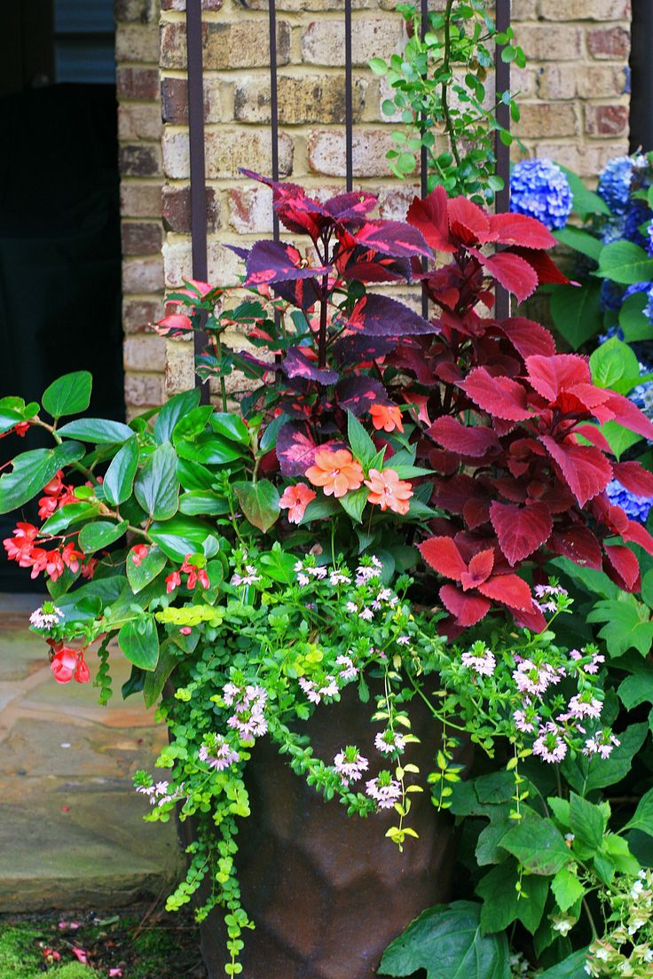 Part shade container combines both blooms and leaves for for Porch plants that are part sun and part shade
