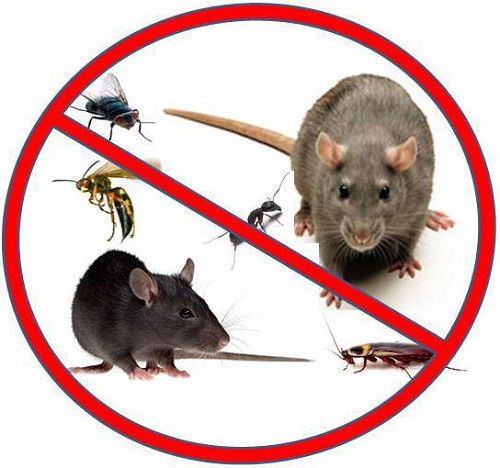 Image result for Pest Control Services