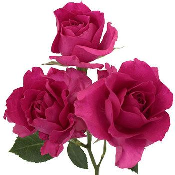The 88 best dark pink images on pinterest hot pink bouquets and dark pink bulk spray roses mightylinksfo