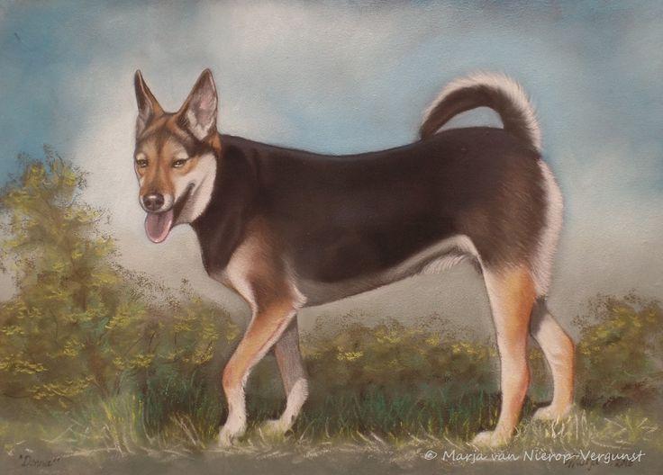 Marja's Pastel Art, Gabber Dierenportretten, Honden portretten