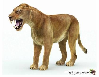 Cave Lion: one of the largest lions ever (extinct 2,000 years ago)