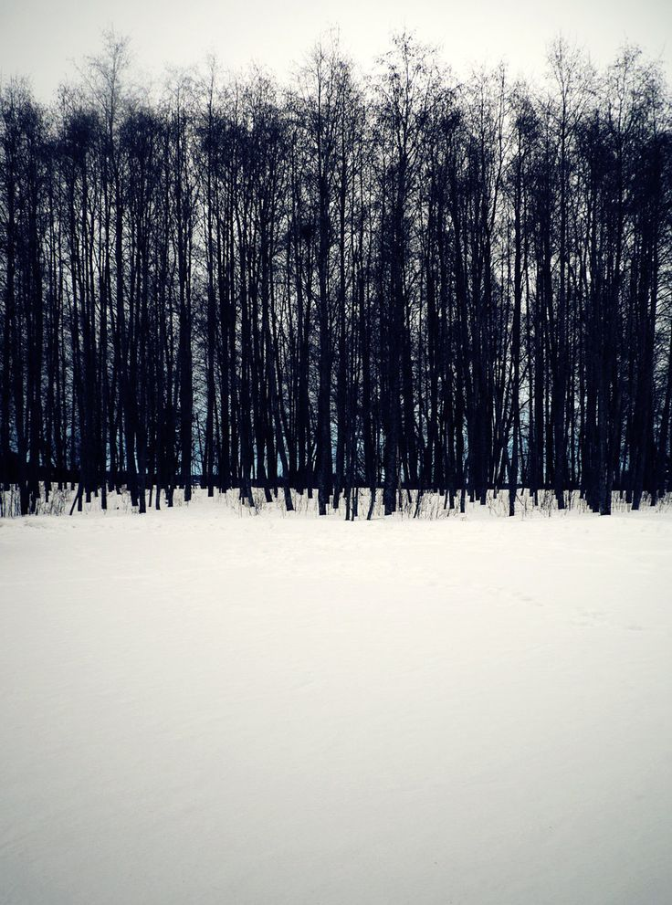 metà alberi