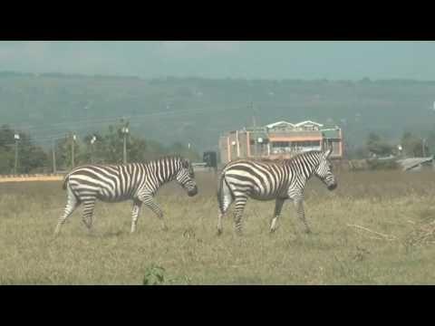 Ausflug zum Äquator und zum Lake Nakuru