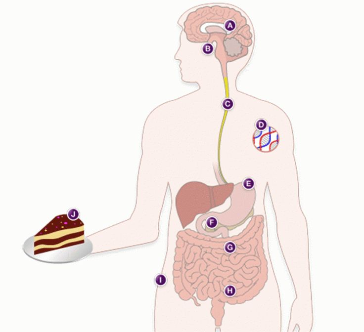 Diagram of a person eating online schematic diagram 23 best healthy eating images on pinterest healthy eating eat rh pinterest com bug diagram incident report body diagram ccuart Image collections