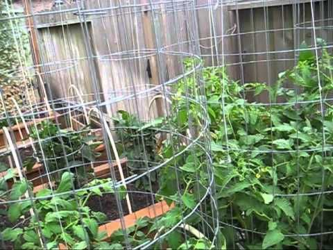 These Tips Are All You Need to Grow 50-80 Lbs of Tomatoes Per Plant in Your Garden!