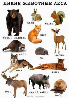 http://steshka.ru/wp-content/uploads/2015/09/dikie_zhivotnye_kartochki_3.jpg
