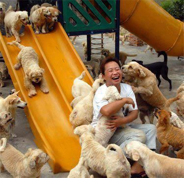 In the Jiangsu Province in China, animal rescuers paid eight thousand dollars to buy all the dogs who were already in a truck on its way to the slaughterhouse. They posted this photo on Facebook after bringing all the rescued dogs to the Ping An A Fu stray animal rescue.