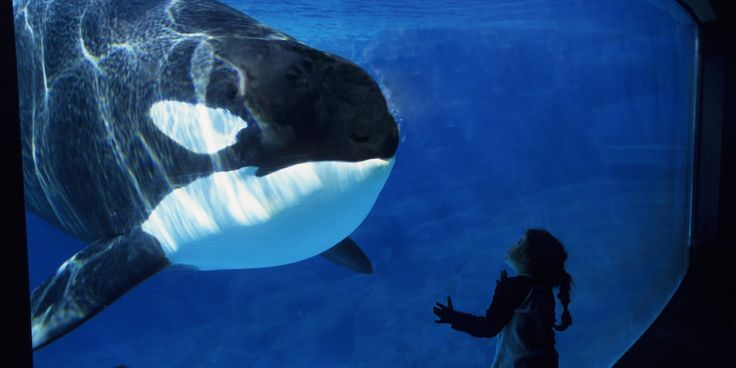 Many SeaWorld orcas were on daily drugs to treat chronic stress, several of the park's former trainers have told The Dodo....