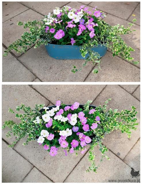 1. trzmielina 2. petunia (biała i fioletowa)