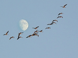 lantern song http://www.amazon.com/High-and-Blue-the-Sky/dp/B0012CDCVE/ref=sr_1_1?ie=UTF8=1351093050=dm High-and High and blue the sky  trees are very tall  wild geese flying seem so small  see on silent wings in flocks they go  never parting from a single row    we go through the land  like a wild gees band  brothers in one flight are we    clear and dark the night  star are very bright  lantern shining seems so small  see in single file we walk along  singing joyfully   cont in comments