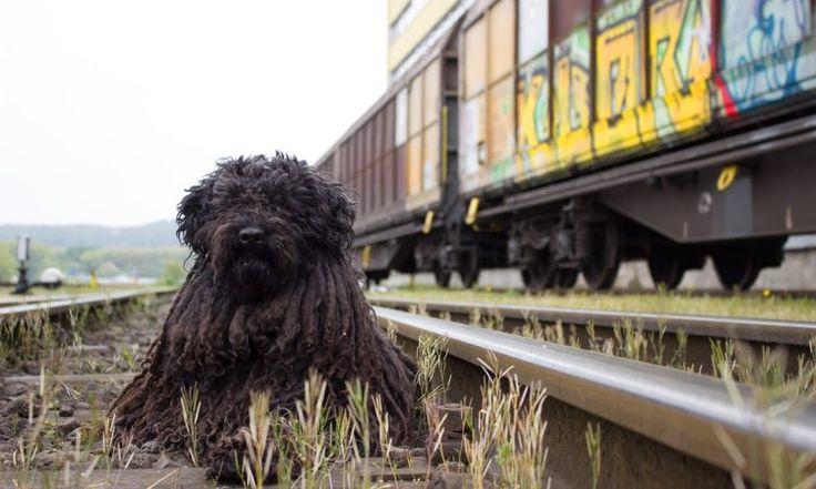 Viaggiare con il proprio animale, che sia un cane, un gatto, o qualunque altro, non sempre è facilissimo. E per chi ama, un animale da cui proprio non vuole separarsi neanche per pochi giorni, inizia la ricerca del mezzo più comodo (per il nostro amico!). Questo articolo sarà dedicato esclusivamente ai viaggi in treno. In quanto, a mio avviso, è il mezzo più semplice e comodo per noi e per lui. È necessario Innanzitutto, munirsi del libretto del nostro animaletto. Controlliamo che le…