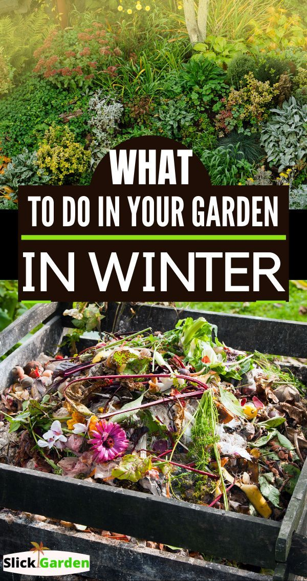 4157601413a0bc84067eead401fd0d36 - What Can Gardeners Do In Winter