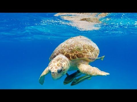 GoPro: 3D Sea Turtle with Andy Casagrande in 2.7K These animals have so much grace, captured perfectly with lovely soundtrack. Photography channel I think.R