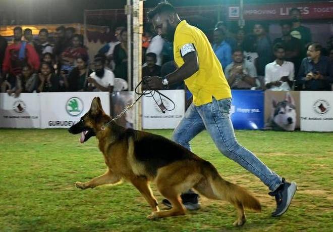 German Shepherd From Delhi Steals The Show In 2020 German