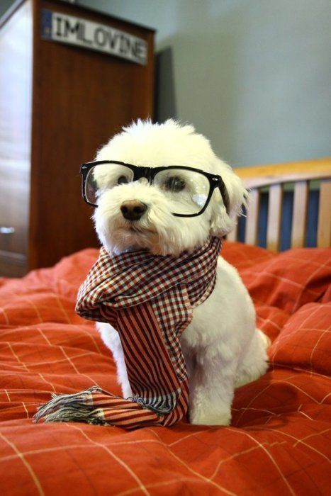 omg, gonna name my dog Professor and dress him up like this, I don't like making dogs wear clothes but I think a scarf is acceptable